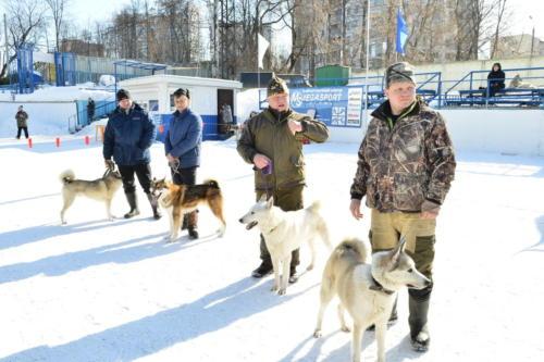 Зимняя выствка собак 2019 г.